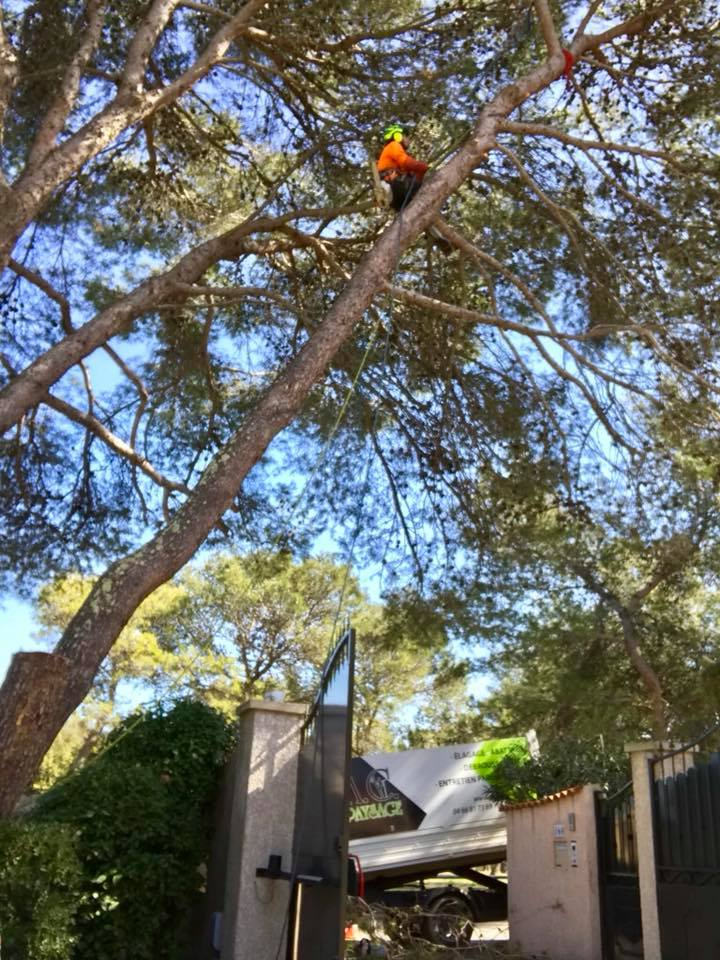 Abattage d'arbre dangereux