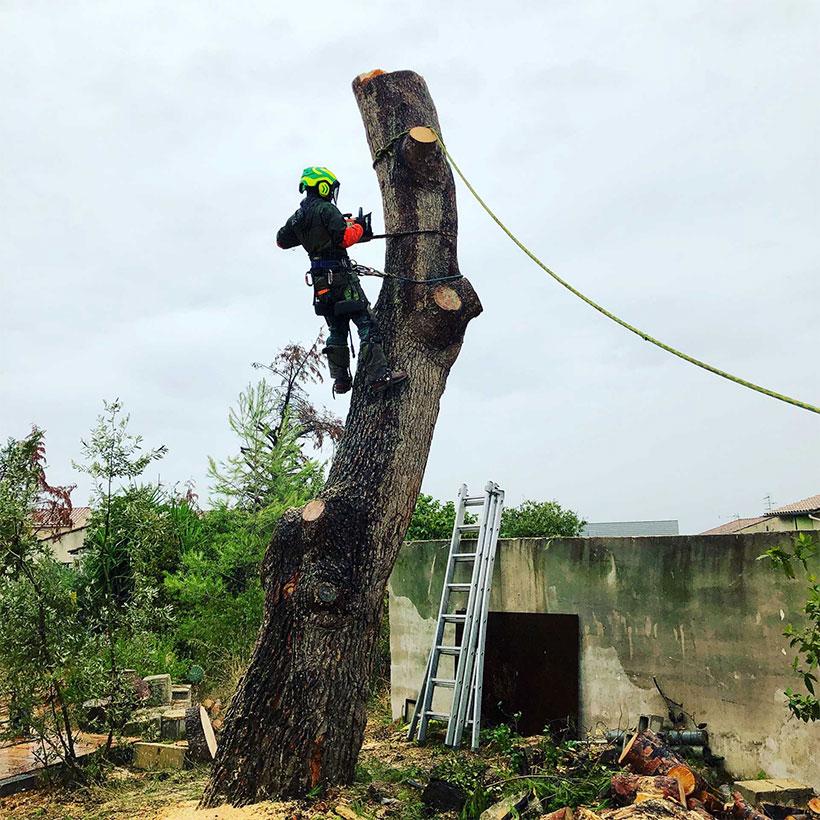 Abattage d'arbre à Nîmes par AC Paysage