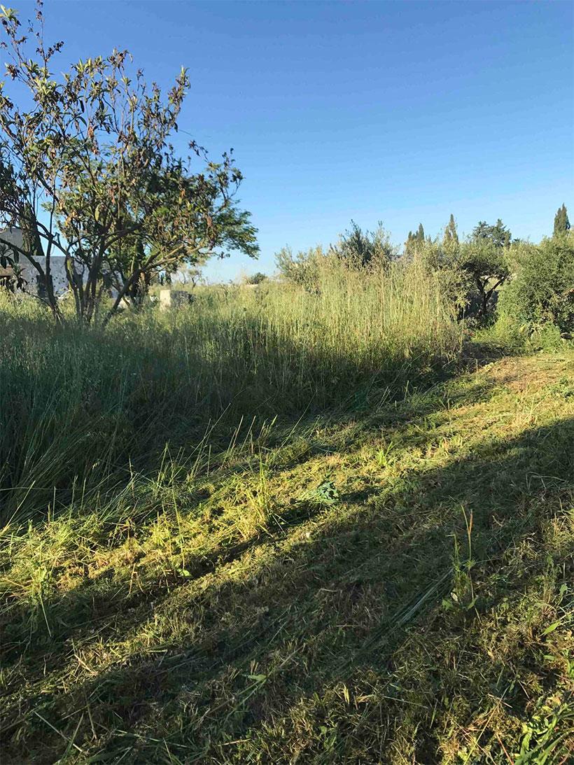 Débroussaillage des jardins et terrains par AC Paysage